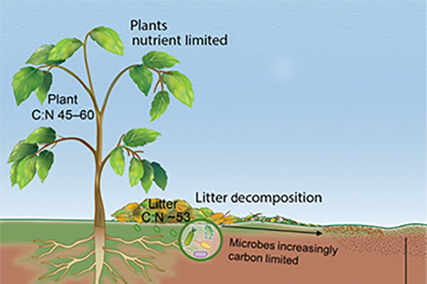 Integrating Microbes into Our Understanding of Ecosystem Carbon Cycling