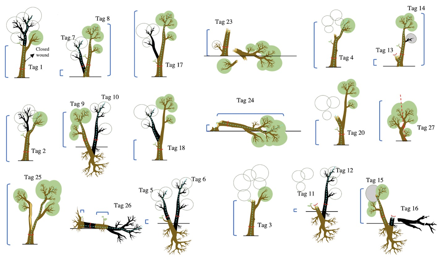Measuring Tree Death and Damage in Tropical Forests